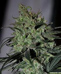 Cannabinoids For Sale Uk